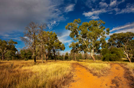 buisson: Une bifurcation de la route au cours d'une promenade à travers le bush australien.