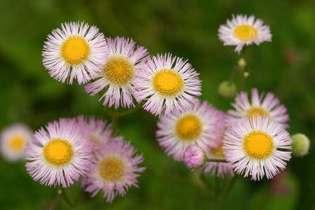 白と黄色の花 写真素材