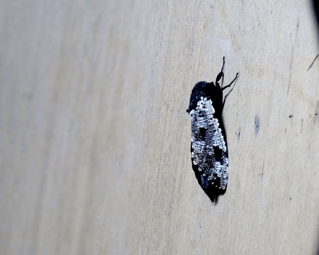black: A strange beautiful insect