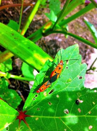 faisant l amour: Bugs faisant l'amour Banque d'images