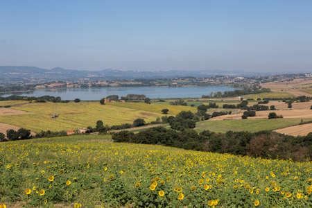montepulciano: I girasoli sul lago di Montepulciano