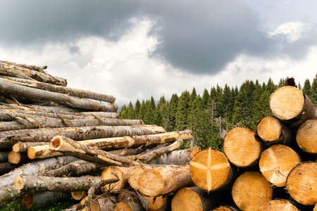 Stacks of trunks from trees felled by storm Vaia. Recovery of fallen timber on Monte Avena, Dolomiti Bellunesi National Park, Veneto, Italy
