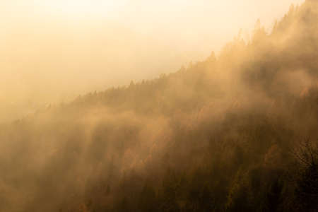 Side of the mountain covered with autumn colored trees and illuminated by the rays of the setting sun that break through the mist. Dolomiti Bellunesi Natural Park, Veneto, Italy