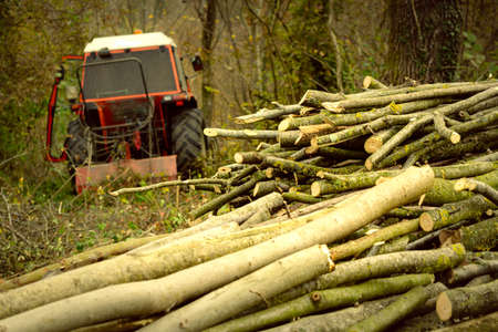 A pile of freshly cut logs with a tractor to transport timber in the background. Sedico, Belluno, Italy