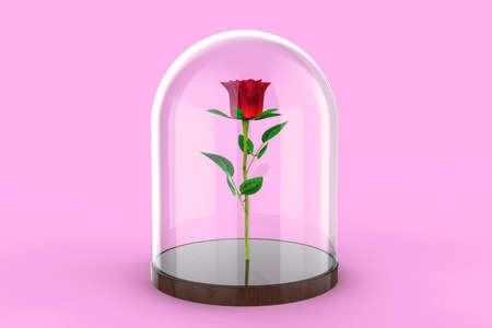 Red Rose under a glass dome on pink background. The Beauty and the Beast story. 3d illustration