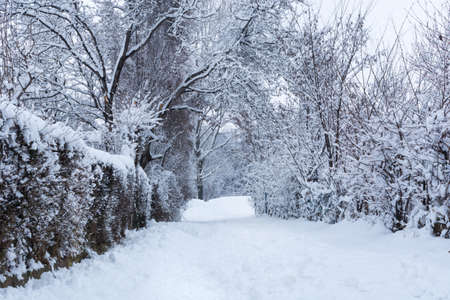 Path covered with big snow in park on cold winter day. Winter idyll and cold weather with snow concept