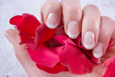French nails polish style on woman hand. Girl holding red rose petals in studio. Manicure and Beauty concept. Close up, selective focus