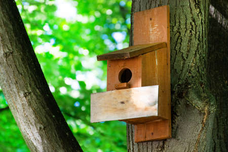 Birdhouse on a tree in forest park on spring day, hand wood shelter for birds to spend the winter. Wooden empty plank for text. Close up, selective focus
