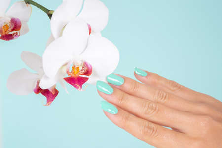 Young woman hand with a turquoise color nails polish and white orchids flower isolated on soft blue background in studio. Manicure and beauty concept. Close up, selective focus
