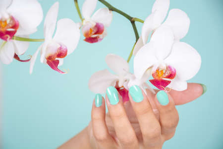 Beautiful woman hand with a turquoise color nails polish and white orchids flower isolated on soft blue background in studio. Manicure and beauty concept. Close up, selective focus 写真素材