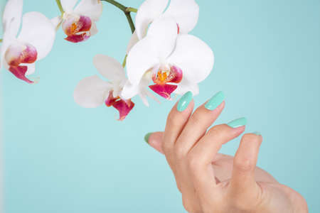 Girl hand with a turquoise color nails polish and white orchids flower isolated on soft blue background in studio. Manicure and beauty concept. Close up, selective focus 写真素材