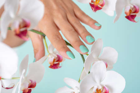 Woman hand with a turquoise color manicure on nails and white orchids flower isolated on soft blue background in studio. Manicure and beauty concept. Close up, selective focus