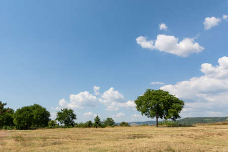 Landscape image with a yellow dry meadow, a green tree and a blue sky with white clouds on the mountain on a sunny summer day