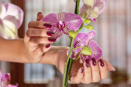 Beautiful female hands with wine color nails polish and purple orchid flower and blurred background. Manicure and beauty concept. Close up, selective focus 写真素材
