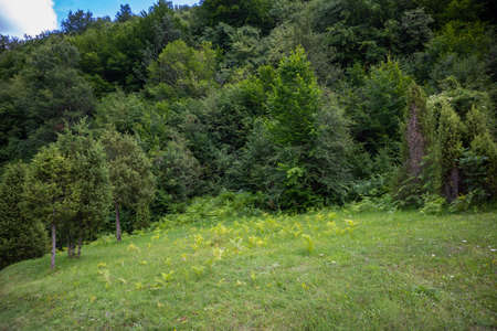Green grass on meadow and forest in national park Tara, Serbia. Relaxation in nature concept
