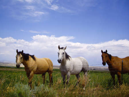 brown horse: Three horses of a different color in Montana Stock Photo