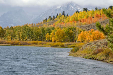 Trees turning colors at Oxbow Bend Grand Tetons photo