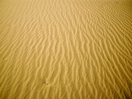 Glowing sand ripples at Death Valley photo