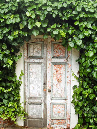 Ivy forms an arch over weathered doorway photo