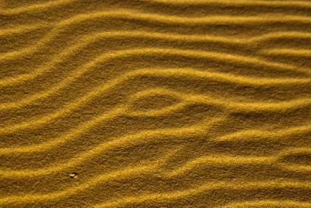 Desert sand ripples form sidewinder trails Stock Photo - 13607832