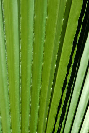 Light and shadow play on green palm fronds Stock Photo - 13607793