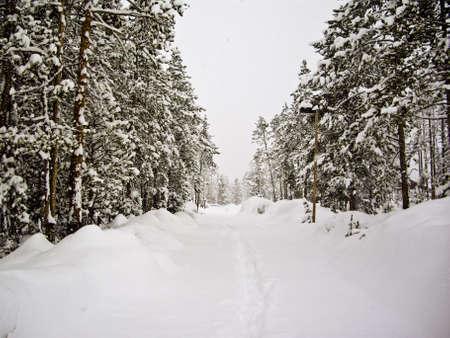 April snow storm hits Yellowstone Park, USA Stock Photo - 14168846