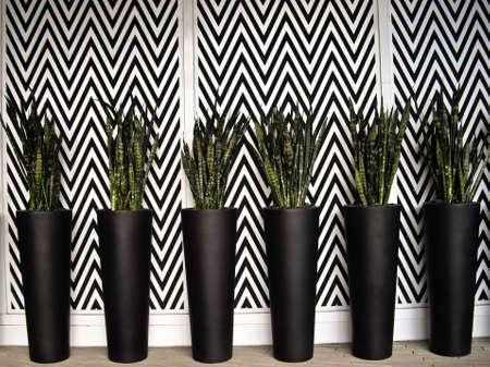 jardineras: Seis Planters negros con cactus en negro y blanco muro Foto de archivo