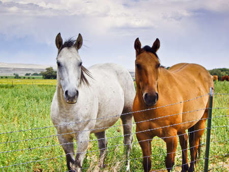Two horses stand at wire fence hoping to get free photo