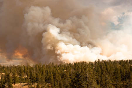 rages: Fire rages in Antelope Creek, Yellowstone Park