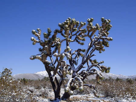 mohave: Rare snow storm in Mohave desert, Nevada