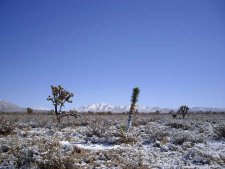 mohave: Snowstorm in Mohave desert covers the cacti Stock Photo