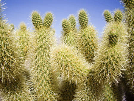 spines: Green cactus with many spines Stock Photo