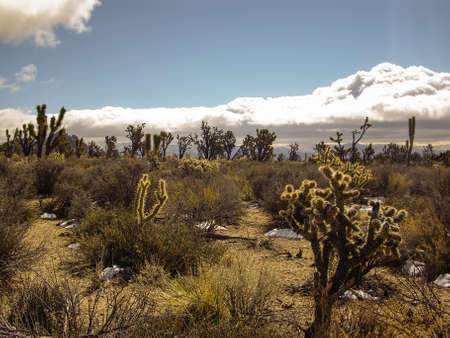 gathers: Storm gathers over desert in Nevada Stock Photo