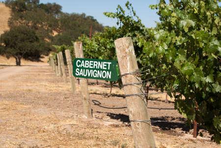 cabernet: Reg�strate para las uvas de Cabernet Sauvignon en el pa�s del vino de California