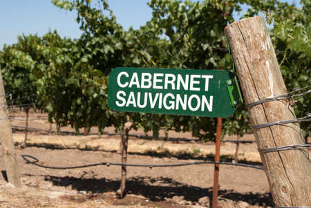 cabernet: Cabernet Sauvignon grapes in California