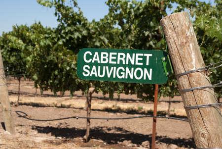 cabernet: Uvas Cabernet Sauvignon en California