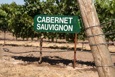 cabernet sauvignon: Cabernet Sauvignon grapevine sign in California