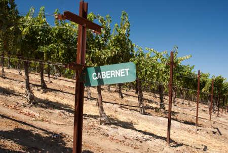 cabernet: Signo Cabernet vi�edo en California