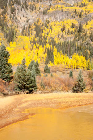 muddy: Aspens on mountainside by muddy yellow river
