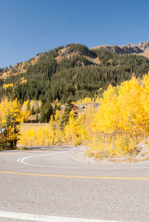 abound: Aspens abound in Colorado high country