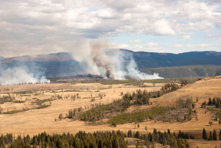 billow: Forest fire in Yellowstone National Park, Wyoming USA