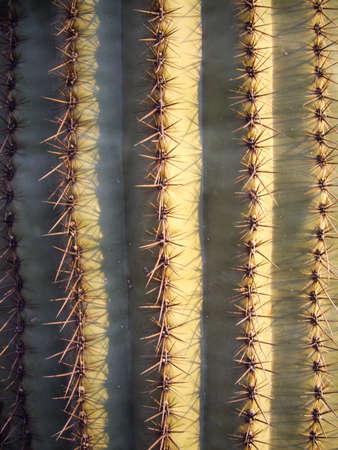 desert ecosystem: Saguaro cactus in Saguaro National Park, Arizona Stock Photo