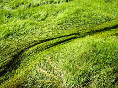 Grassen stromen in thermische rivieren in Yellowstone National Park Stockfoto