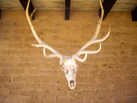 Elk antlers hang from rafters on adobe walls Stock fotó