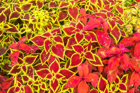 Flora with red and yellow leaves