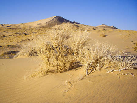 the flora: Generic flora of Mojave Desert