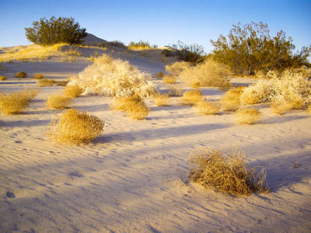 Tumbleweeds in afternoon light