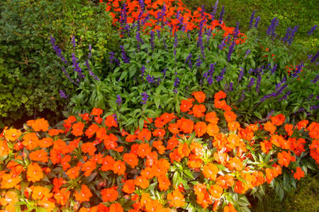 Sun lights up flower beds of poppies and lupins Stock fotó