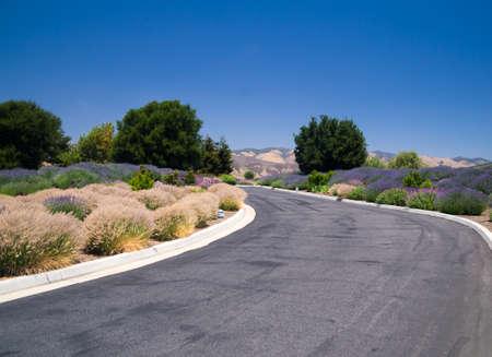 Desert plants and flowers of California