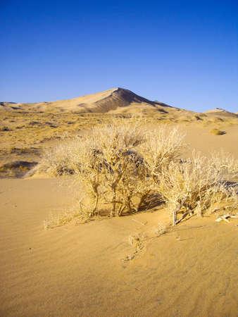 Mojave Desert landscape
